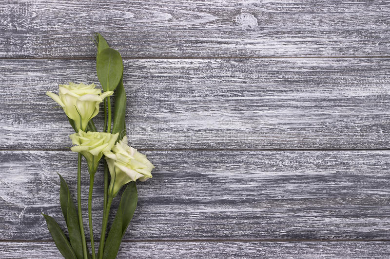White flowers gray wooden background. Valentines day.Wedding.Greeting card. Womans Day. 8 march. royalty free stock image