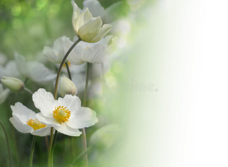 White flowers on green background stock photography