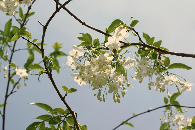 Flowers are white with a sky backdrop. royalty free stock images