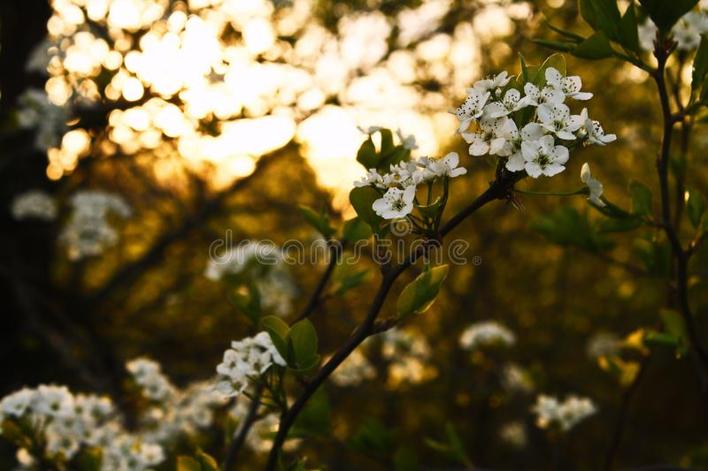 White Flowers With Green Leaves royalty free stock images