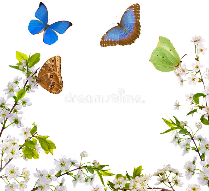 White flowers half frame and butterflies stock images