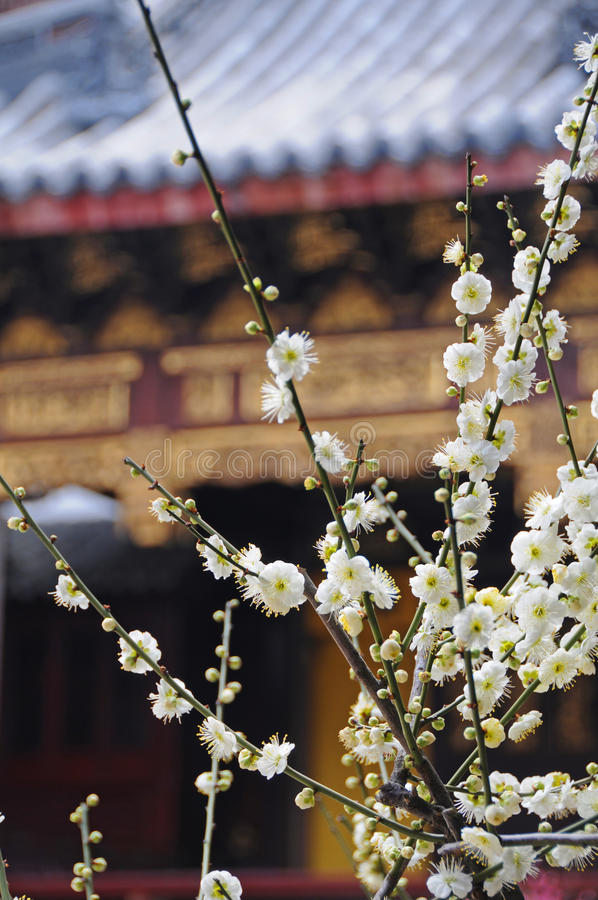 Free White Flowers In Ancient Theatre Stock Images - 11778004