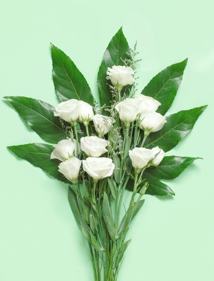 White flowers on a light green background top view stock image