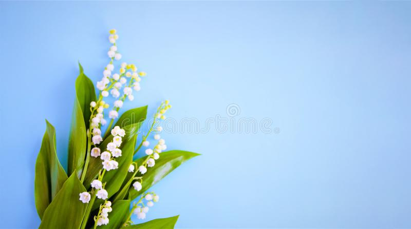 White flowers of a lily of the valley on a blue background. royalty free stock photography