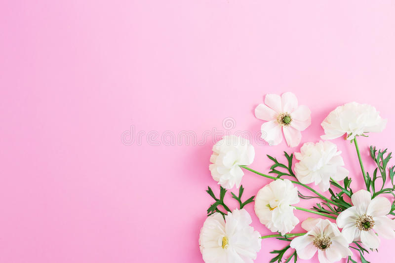 White flowers on pink background floral pattern flat lay top view download white flowers on pink background floral pattern flat lay top view mightylinksfo