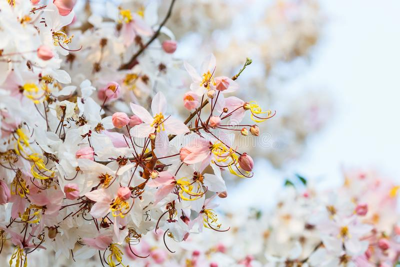 White flowers Pink flowers Wishing Tree. stock photos
