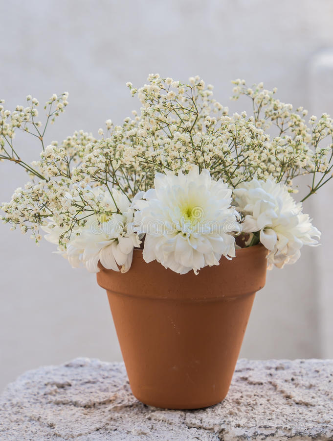 White flowers in pot. White flowers in orange pot royalty free stock photo