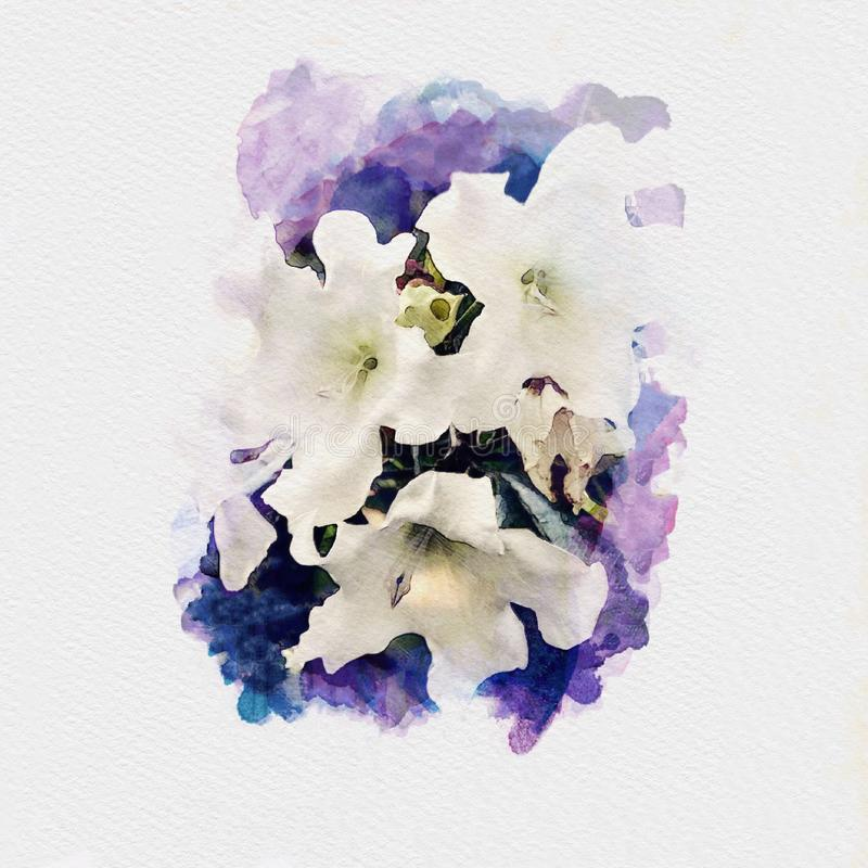 White flowers on purple color watercolor painting illustration. On white paper background stock illustration