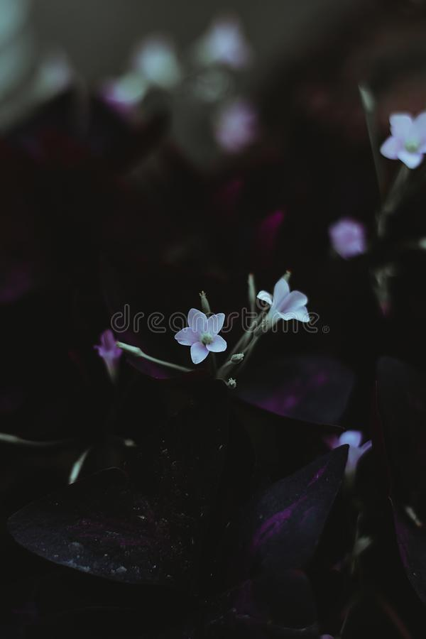 White Flowers Selective-focus Photography stock photo
