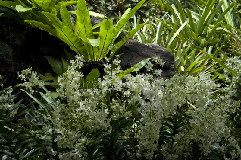 White flowers and tropical plants leaves royalty free stock image