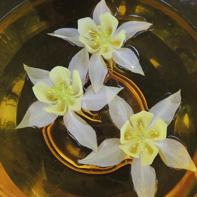 White flowers in vase with glass of water on a dark background closeup royalty free stock images