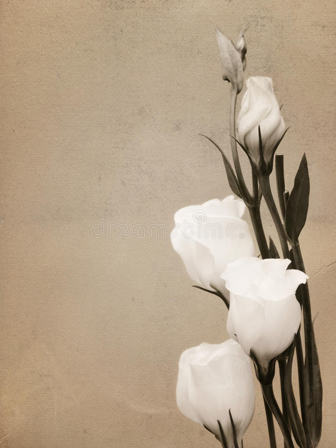 Download White Flowers Vintage Card stock photo. Image of present - 24765920