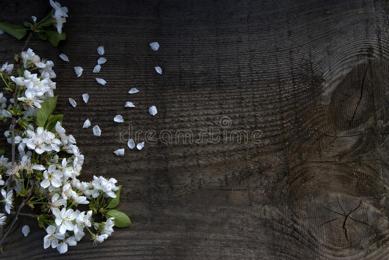 White flowers. On wood background stock images