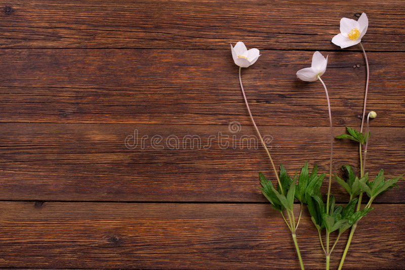 Download White Flowers On Wooden Table. Top View, Copy Space. Stock Image