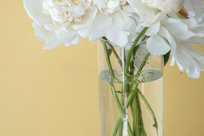 White fluffy peonies flowers in vase on yellow background royalty free stock photography