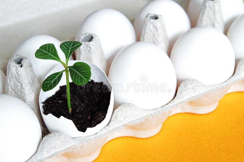 White fragile eggs and tender green sprout in eggshell as symbol of life and renewal on bright yellow background. Easter concept. stock photo