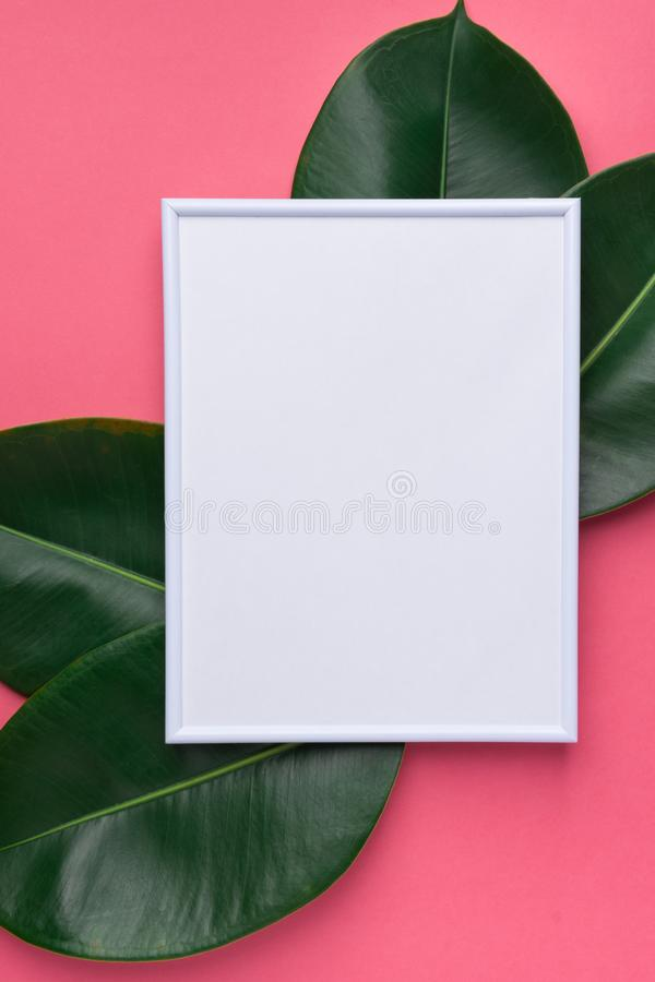 White frame mockup with beautiful big green ficus leaves on cherry pink background. Organic Cosmetics Wellness spa royalty free stock photos