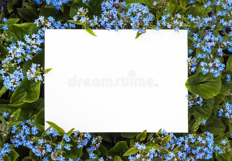 Summer frame of blue flowers stock images