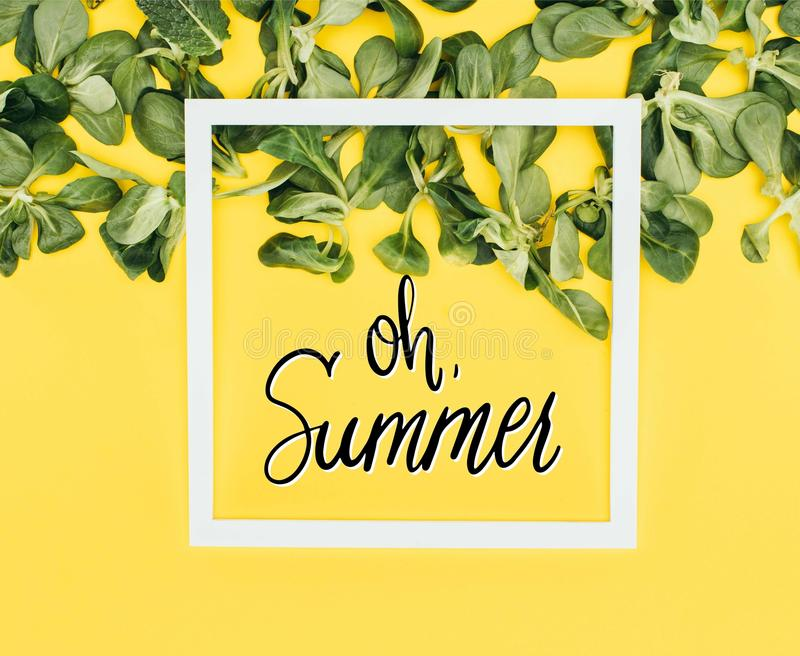 white frame with words oh summer and green leaves royalty free stock photos