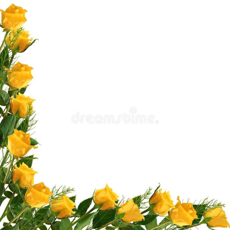 White frame with yellow rose stock photos