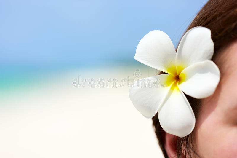 Download White frangipani flower stock image. Image of copy, closeup - 40163743