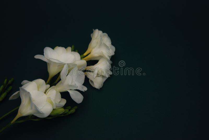 Download White Freesia Bouquet Of Flowers On Black Background. Copy Space. Close Up. Stock Image - Image of fragrance, elegance: 111619097