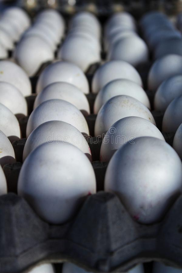 White fresh eggs at a market stall. In Santa Pola, Alicante, Spain royalty free stock photo
