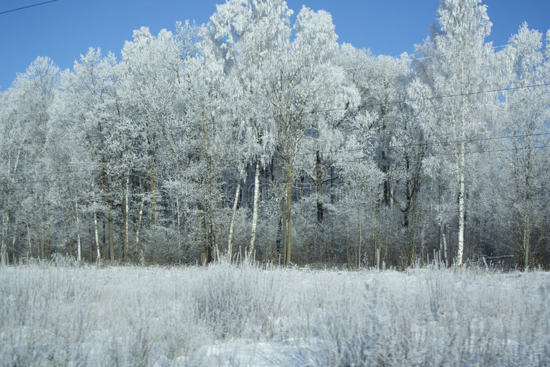 White frost royalty free stock images