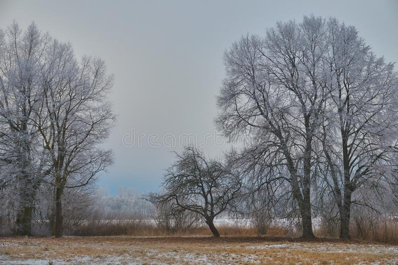 White frost on trees royalty free stock photography