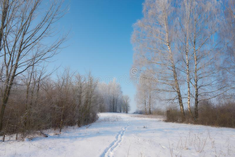 White frost on trees, winter morning royalty free stock images