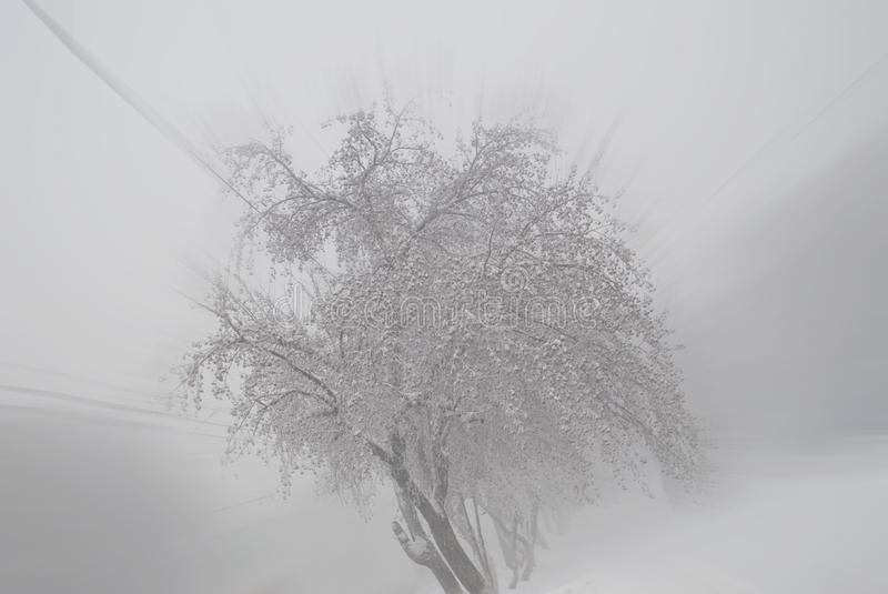 White frosty day stock photography