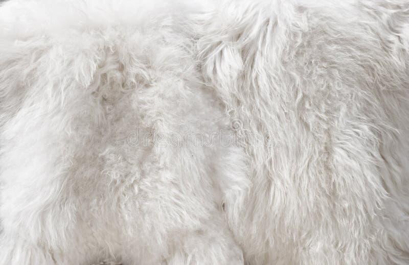 White fur stock photos