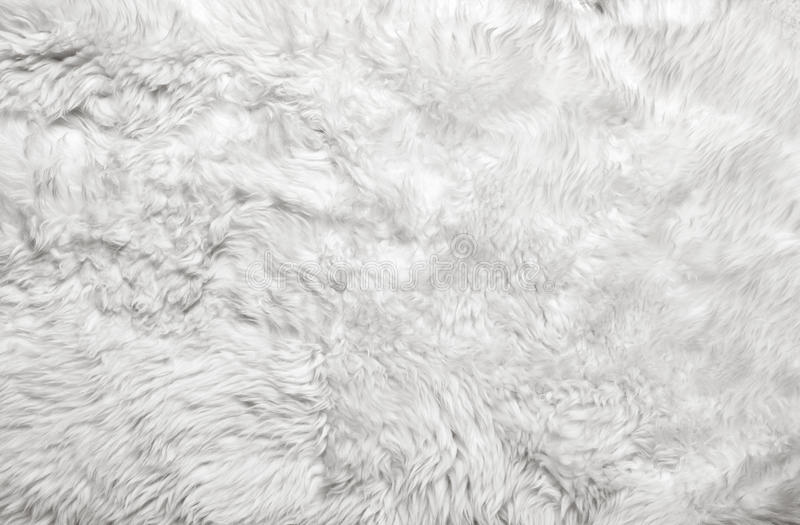 White fur background stock photos