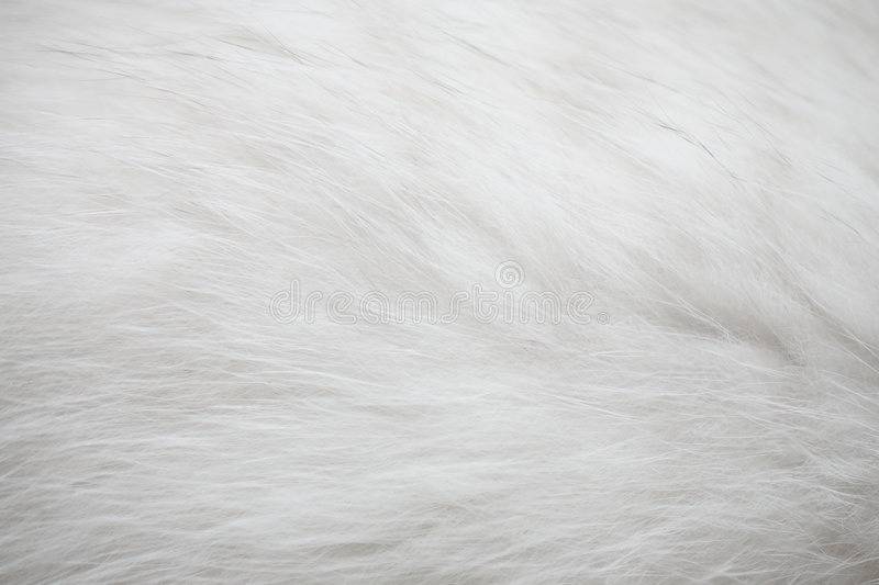 White Fur Texture Background Stock Image Image Of Warm