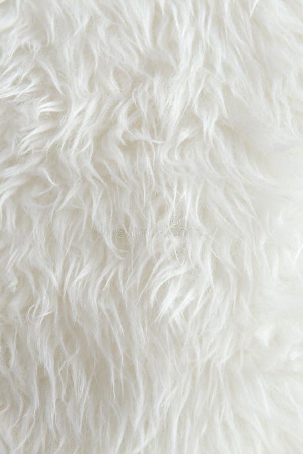 White Fur Texture Background Stock Photo Image Of White