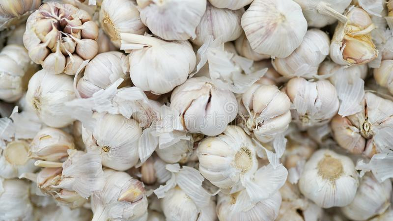 White garlic pile texture. Fresh garlic on market table closeup photo. Vitamin healthy food spice image. Spicy cooking ingredient royalty free stock images