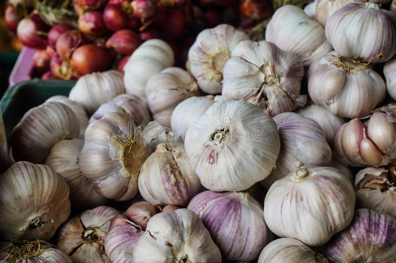 White garlic pile texture. Fresh garlic on market table closeup photo. Vitamin healthy food spice image. Spicy cooking ingredient royalty free stock photos