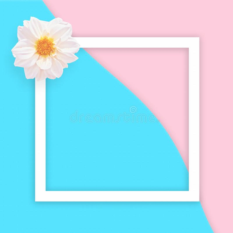 White georgina on abstract sea and pink sand background with white flat frame square. Flat lay. Summer is coming. White georgina on abstract sea and pink sand royalty free stock images