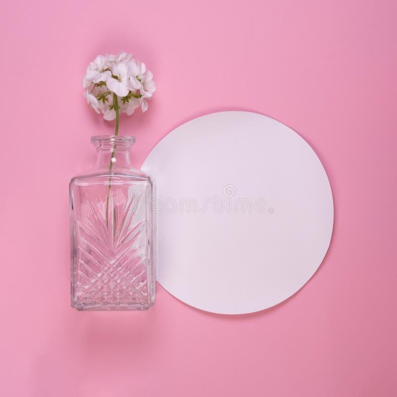 White geranium flower in glass vase stock photography