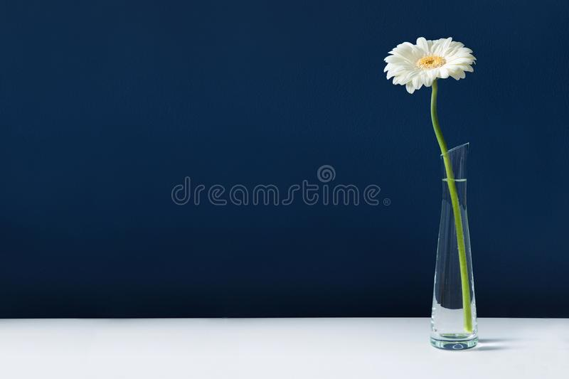 White gerbera in glass vase on white table stock image