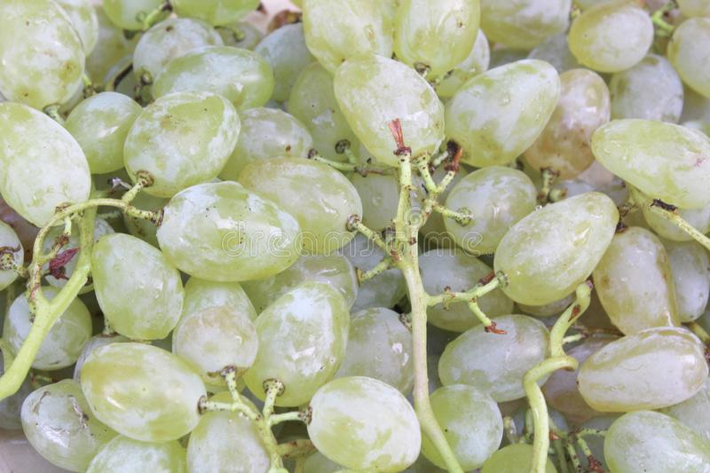 white grape for wine stock images