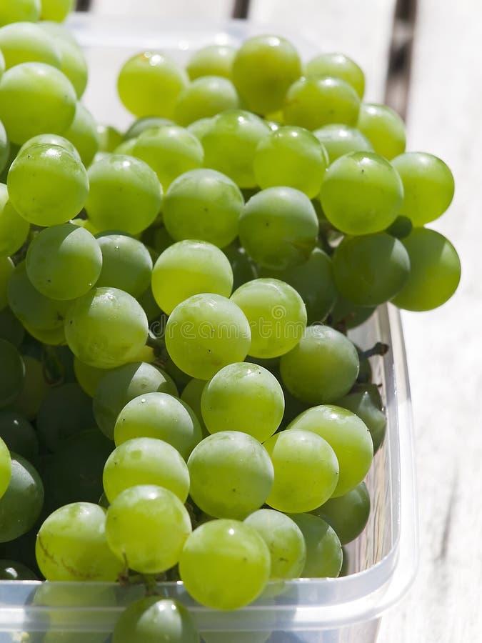 Download White grapes stock photo. Image of fresh, horizontal - 26624382