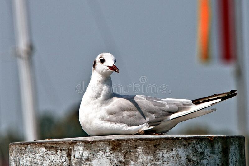 White and Gray Bird on Brown Container stock photo