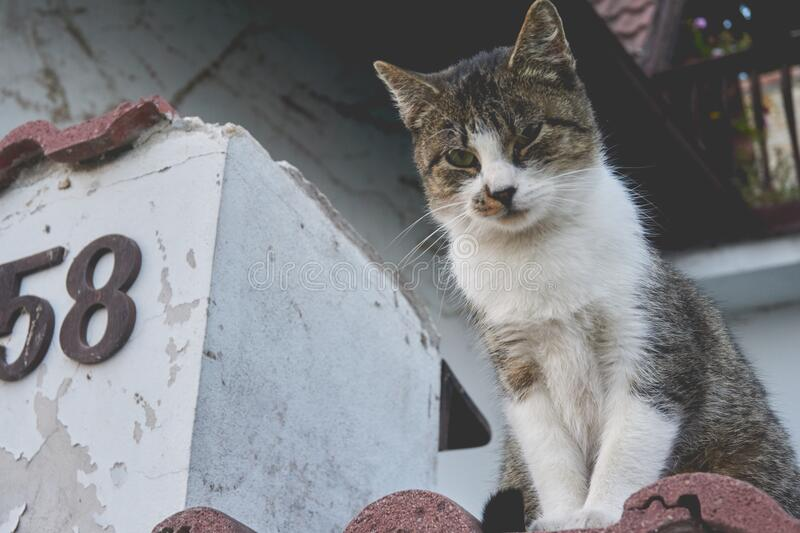 White and Gray Cat on Brown Roof royalty free stock photography