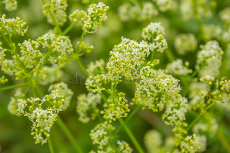 white and green background with wildflowers stock photo