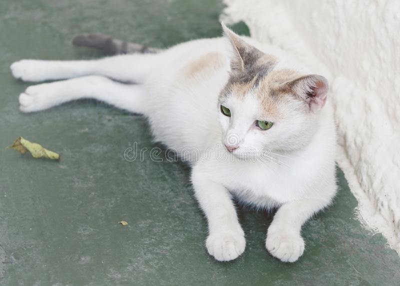 White, green eyed stray cat resting. A sweet white, green eyed, female stray cat resting on the floor of a tavern in Corfu, Greece stock photography
