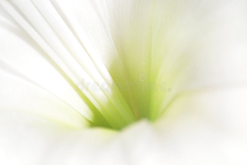 White and green flower royalty free stock photography