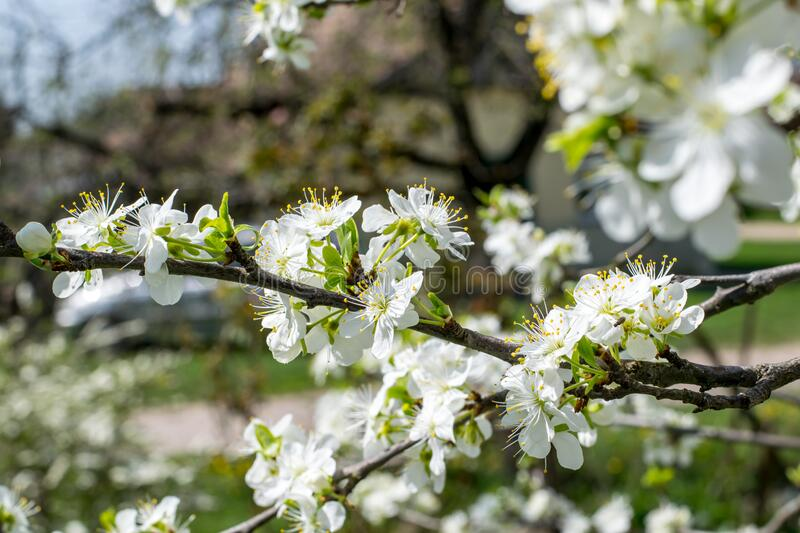 White Green Flowers during Daytime royalty free stock image