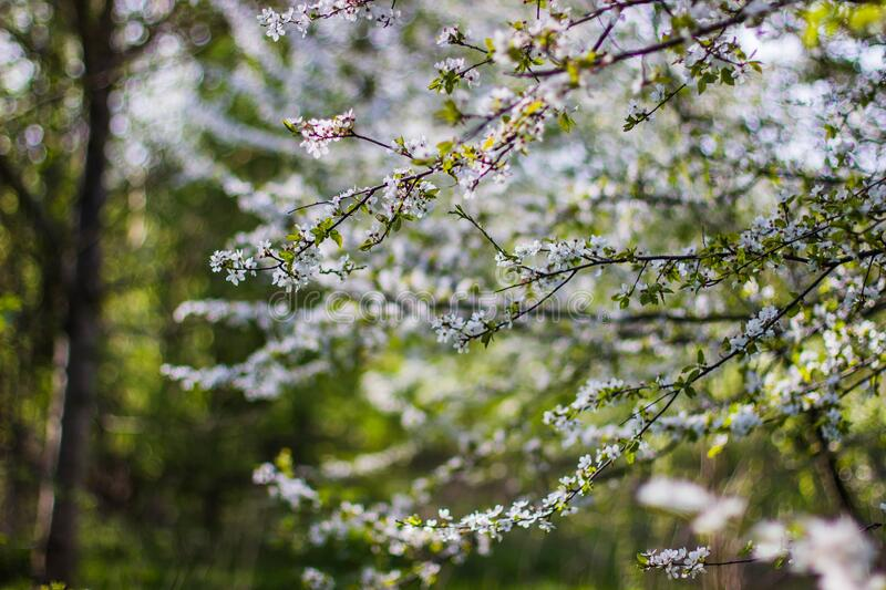White and Green Flowers during Daytime stock photo