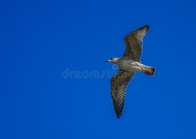 White and Grey Bird Flying during Day Time royalty free stock image